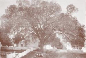 "Delegates to the June 1816 constitutional convention apparently often worked in the shade of the ""Constitution Elm.""   Said to be enormous with branches that spanned over 100 feet, it died of Dutch Elm Disease in 1925."