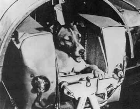 Russia's Laika, the first dog in space