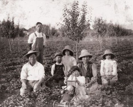 Immigrant family in strawberry field with orchard, Pajaro Valley, California